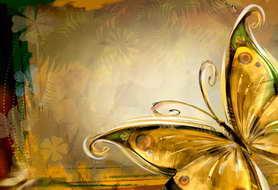 蝴蝶,热带,热带风情,旅游,婚礼,金灿灿