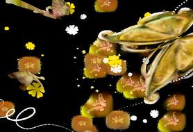 蝴蝶,热带,热带风情,旅游,婚礼,通道,转场,唯美,婚庆,浪漫