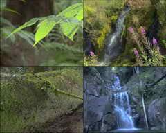雨后,树叶,小溪,瀑布,山涧,青蛙,草地,河流,春天视频素材影视模板