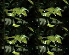 <b>水珠,树叶,下雨,慢镜头,水滴,露珠,自然,优美,失落</b>