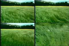 麦浪,小麦,稻谷,粮食,农产品,农业,丰收,成熟视频素材影视模板