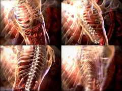 <b>医疗,人体,医学,躯干,三维,内脏,骨骼</b>