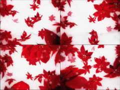 漫天飞舞的红花,枫叶,下雪,诗意,凋零,婚礼,婚庆,红叶