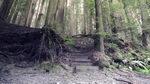 红杉,悠久,树林,古老,森林,公园,美国,视频素材