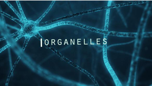 医学,神经元,细胞,病毒,片头视频素材