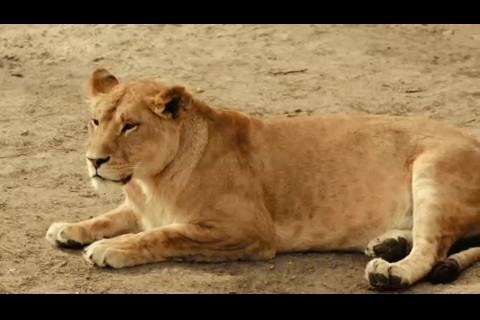各种动物集锦,长颈鹿,狮子,白鹭,企鹅,鹦鹉