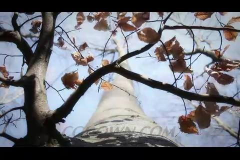 凋谢的树叶,枯叶,草原,树干