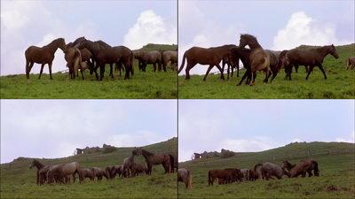 健康的马群嬉戏打闹,马