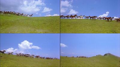 蓝天白云草原大地马群奔驰