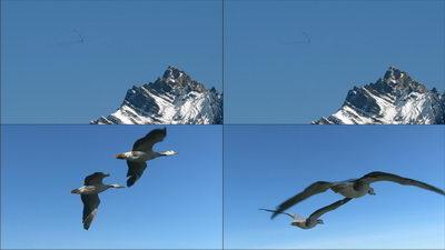 山峰,班头燕,大雁,飞翔,迁徙