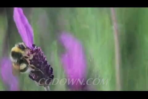 蜜蜂,菊花,天牛,蝴蝶