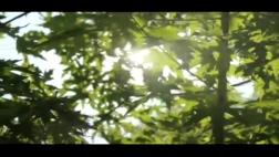 阳光透射绿色树叶,阳光,树叶,绿色