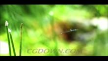 慢动作飞舞的蜻蜓,蜻蜓