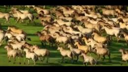 关于马的艺术展现,万马奔腾,黑马,马