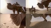 沙漠,骆驼,丝绸之路