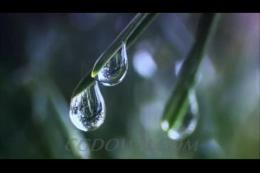 雨润万物生,水滴,下雨,生长