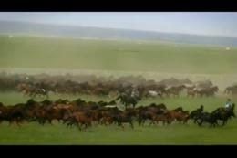航拍大草原,奔跑骏马,马