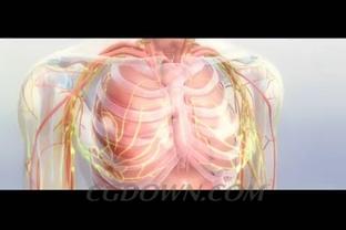 人体血管骨骼内脏全方位呈现,人体,血管