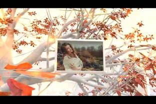 浪漫大树枫叶相框影响展示,相框视频素材影视模板