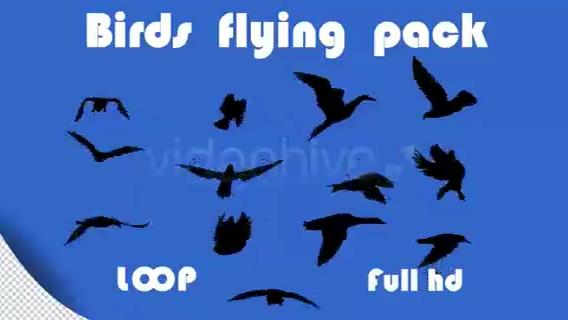 26种飞鸟飞行黑白通道剪影4K视频