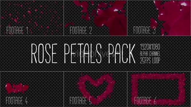 浪漫飞舞玫瑰花瓣转场相框透明通道视频素材,玫瑰