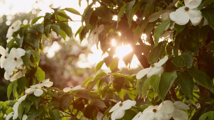 阳光,树叶,温馨,午后,绿色,健康,环保,校园阳光透过树叶温馨高清视频素材视频素材