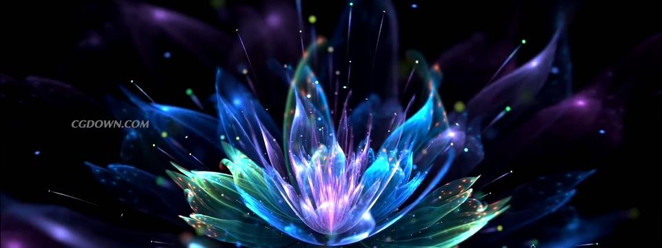 绚丽多彩缤纷梦幻花朵视频素材