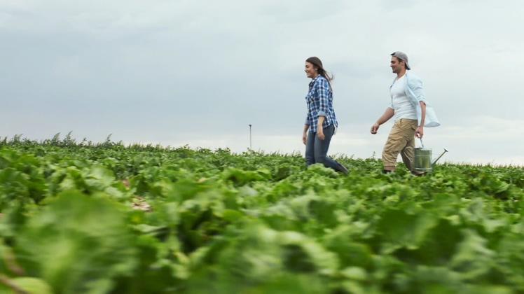 开心幸福年轻夫妇在田野中视频素材