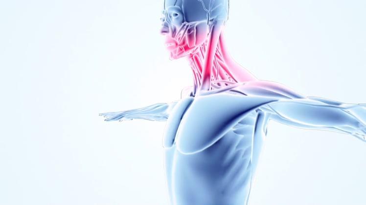 人体,医学,科技,红外线,通经活络,三维,医疗,能量,从脚到头,向上,肌肉,红外线能量从脚到头部通经活络三维人视频素材