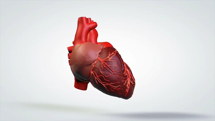 3d三维人体心脏360度旋转教学演示
