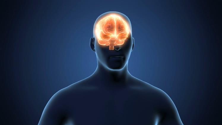 带alpha黑白的人体大脑透明背景3d三维头部素材