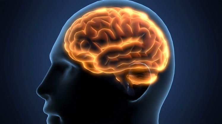 神经系统,大脑,透明,带alpha黑白的人体大脑透明背景3d三维头部素材