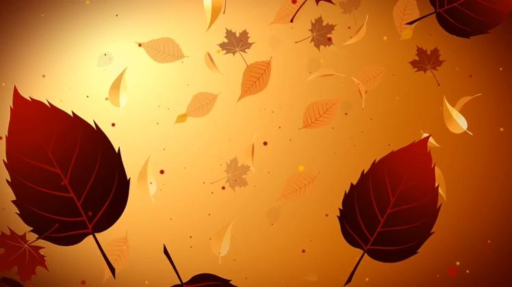 秋天落叶飘落秋天的景象Autumn scene