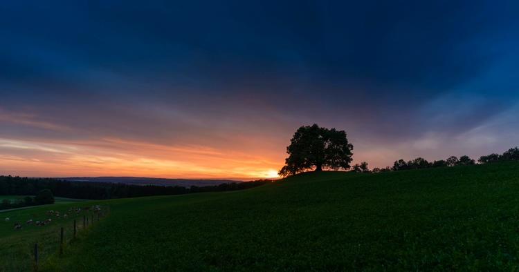 延时,风景,树木,一棵树,草原,乌云,村庄,绿色视频素材