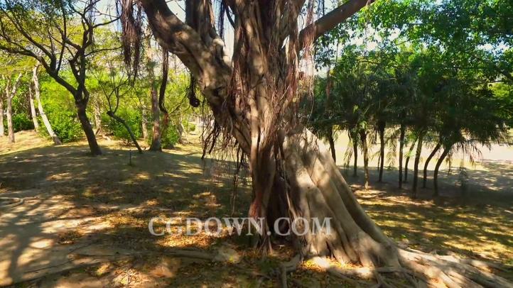 枝干,树木,树叶,树干,繁枝叶茂视频素材