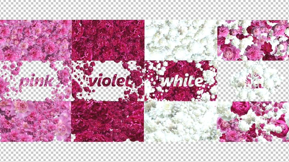烂漫花丛锦绣白色粉丝花朵带通道婚礼片头