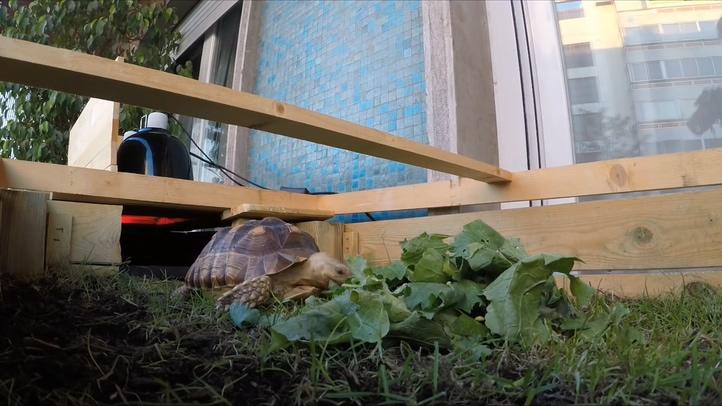 乌龟,小龟,家庭,养龟,乌龟养殖,家庭养殖小乌龟高清视频素材视频素材