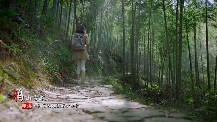 绿茶,采茶,竹林,郎溪,古典建筑,农家,儿童,安徽视频素材