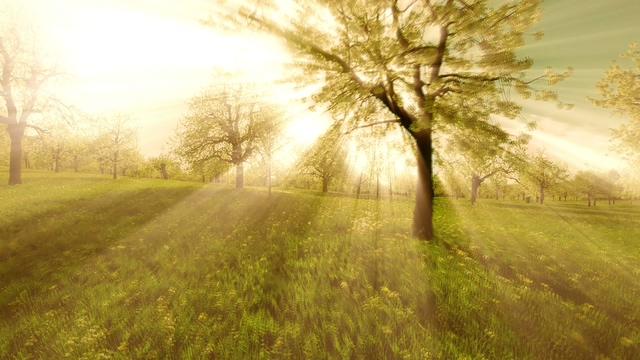 空镜头推进阳光投射树林璀璨夺目