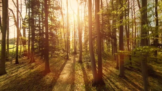 夕阳里无人机在森林中穿梭