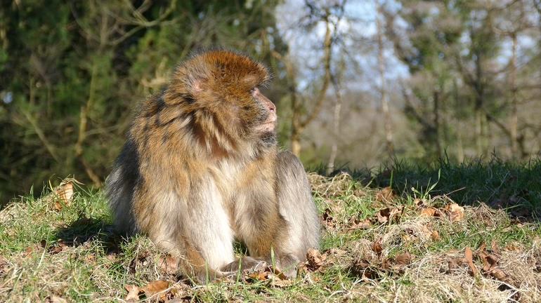 猿猴,猴子,动物,短毛猿,晒阳光的短毛猿4K超清视频素材