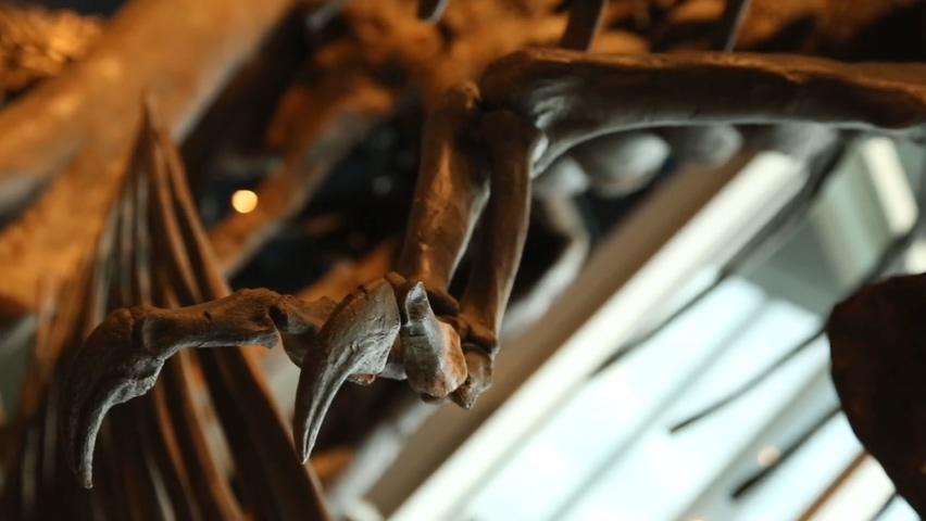恐龙,化石,骨骼,研究,考古,恐龙骨骼艺术品特写实拍视频素材