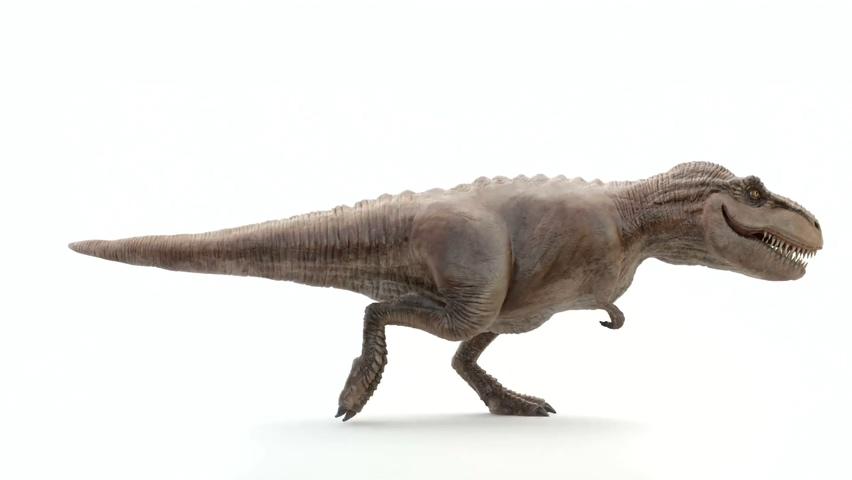 恐龙,霸王龙,行走,通道,黑白,透明背景,可制作透明背景黑白通道的霸王龙行走动画视频素材