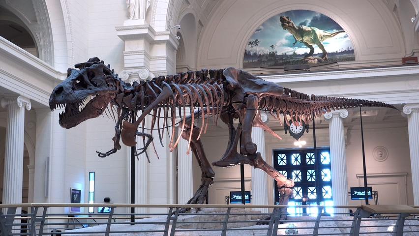 恐龙,骨骼,科学,考古,骨架,国外国家博物馆恐龙化石骨骼骨架展览实拍,免费视频素材