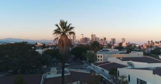 美国,洛杉矶,卡利加州,空中航拍美国洛杉矶棕榈树穿越城市美国卡利加州黄金时段视频素材