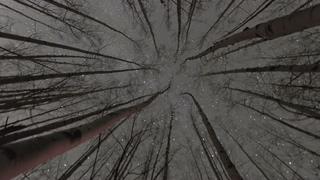 抬头望着树上的星星时间流逝延时