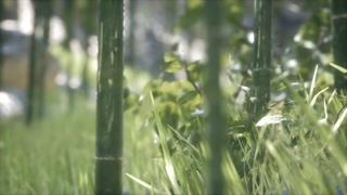 绿色,竹林,竹子,绿色竹林竹子森林背景视频素材