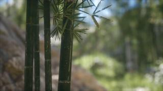 竹子,竹林,绿色竹林森林背景视频素材