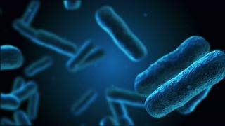 细菌,人体,医学,疾病,飞行在人体中细菌的3d动画|医学影像背景视频素材