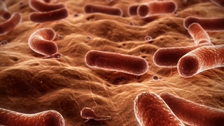 消化系统营养不良肠道细菌